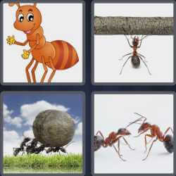 4 pics 1 word 3 letters ants