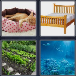 4 pics 1 word 3 letters cat in bed
