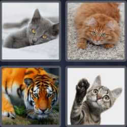 4 pics 1 word 3 letters tiger cat