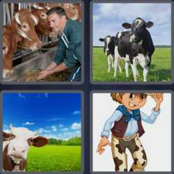 4 pics 1 word 3 letters cows