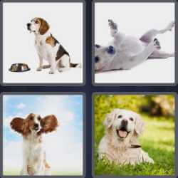 4-pics-1-word-3-letters-dog