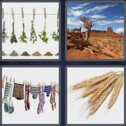 4 pics 1 word clothes hanging