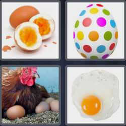 4 pics 1 word hen hatching eggs