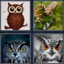 4-pics-1-word-3-letters-owl