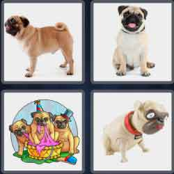 4-pics-1-word-3-letters-pug