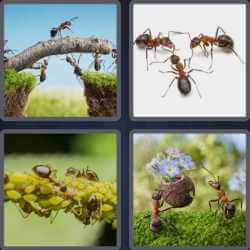 4-pics-1-word-4-letters-ants