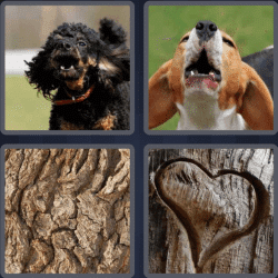 4-pics-1-word-4-letters-bark