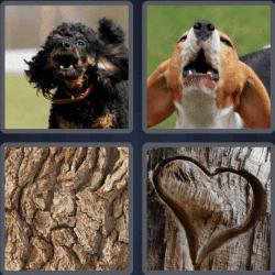 4 Pics 1 Word 4 Letters Bark