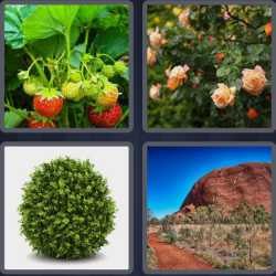 4-pics-1-word-4-letters-bush