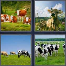 4-pics-1-word-4-letters-cows