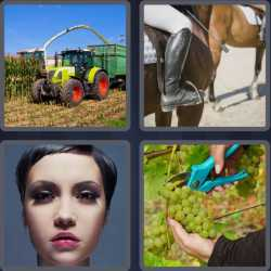 4 Pics 1 Word 4 Letters Crop