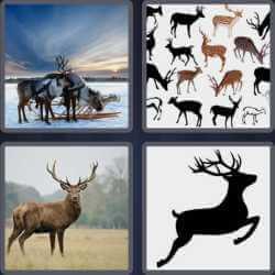 4-pics-1-word-4-letters-deer