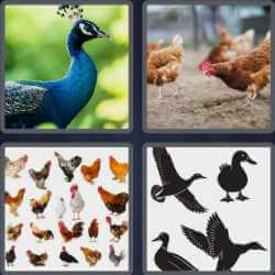 4 Pics 1 Word 4 Letters Fowl