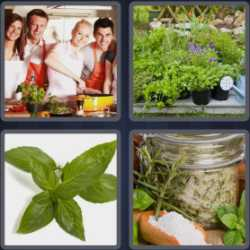 4-pics-1-word-4-letters-herb