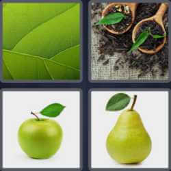 4-pics-1-word-4-letters-leaf