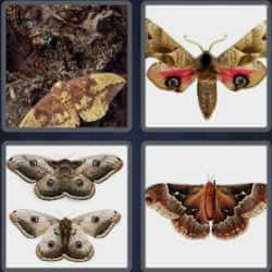 4 Pics 1 Word 4 Letters Moth