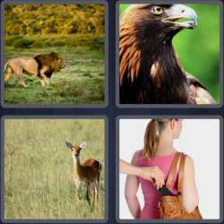 4-pics-1-word-4-letters-prey