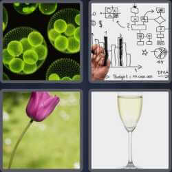 4-pics-1-word-4-letters-stem