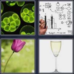 4 Pics 1 Word 4 Letters Stem