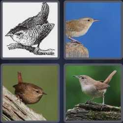 4-pics-1-word-4-letters-wren