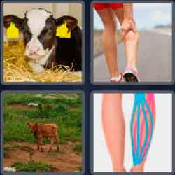 4 Pics 1 Word 4 Letters Calf