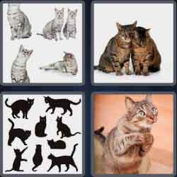 4-pics-1-word-4-letters-cats