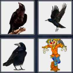 4 Pics 1 Word 4 Letters Crow