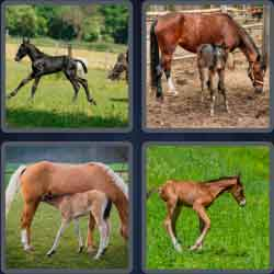 4-pics-1-word-4-letters-foal