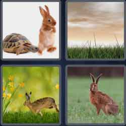 4 Pics 1 Word 4 Letters Hare