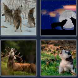 4-pics-1-word-4-letters-howl