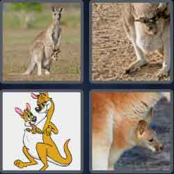 4 Pics 1 Word 4 Letters Joey