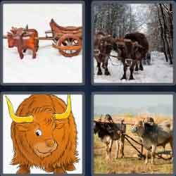 4 Pics 1 Word 4 Letters Level 3658 Oxen