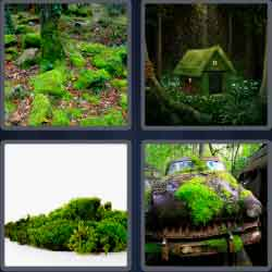 4 Pics 1 Word 4 Letters Level 3665 Moss