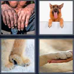 4 Pics 1 Word 4 Letters Level 3670 Paws