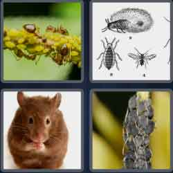 4 Pics 1 Word 4 Letters Pest