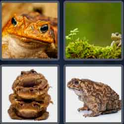 4-pics-1-word-4-letters-toad