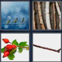 4 Pics 1 Word 4 Letters Twig