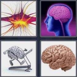 4-pics-1-word-5-letters-brain