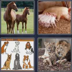 4-pics-1-word-5-letters-breed