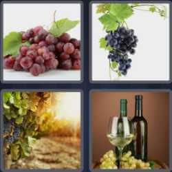4-pics-1-word-5-letters-grape
