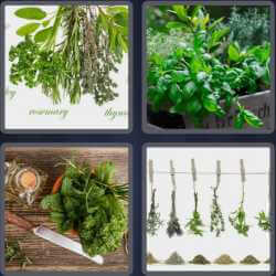 4-pics-1-word-5-letters-herbs
