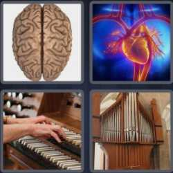 4-pics-1-word-5-letters-organ