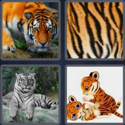4-pics-1-word-5-letters-tiger