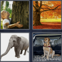 4-pics-1-word-5-letters-trunk