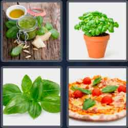 4-pics-1-word-5-letters-basil