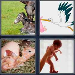 4-pics-1-word-5-letters-birth