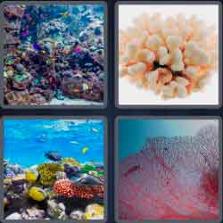 4-pics-1-word-5-letters-coral