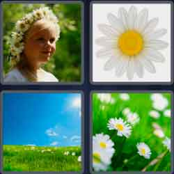 4-pics-1-word-5-letters-daisy