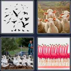 4-pics-1-word-5-letters-flock
