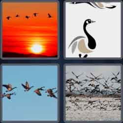 4-pics-1-word-5-letters-geese